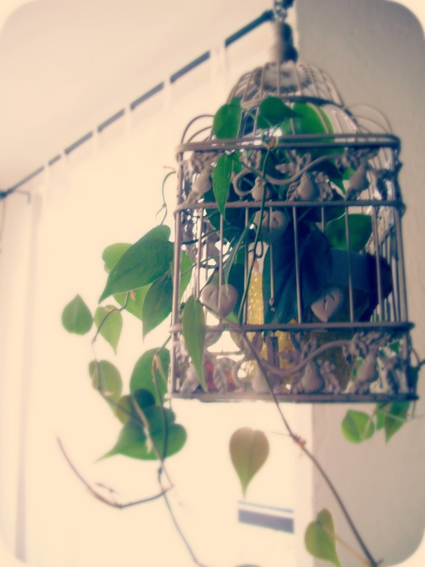 Plant in a bird cage by Lydia Krupinski