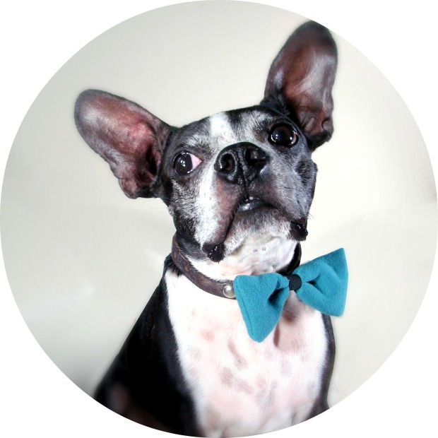 Peanut Loves Butter: Upcycled Cotton Bow Tie