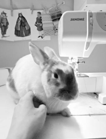 Rocket the Rabbit - the new Pierogi Picnic spokes bunny!