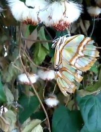 butterfly haven 3